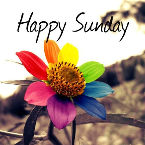 happy sunday hd images calendar  images