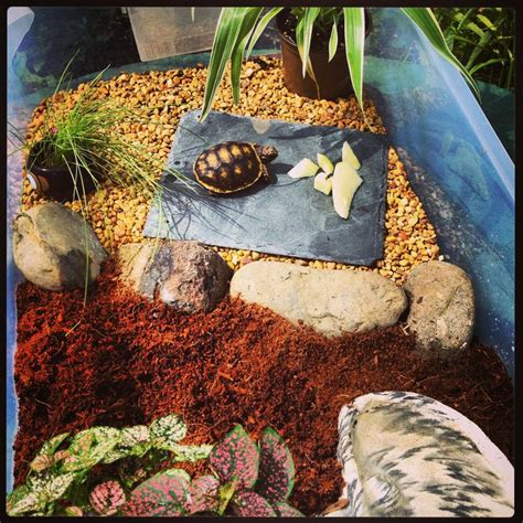 tortoise home decor 1000 images about baby tortoise home on pinterest