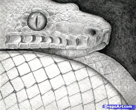 Time To Be A Real Snake by How To Sketch A Snake Snake Step By Step Realistic
