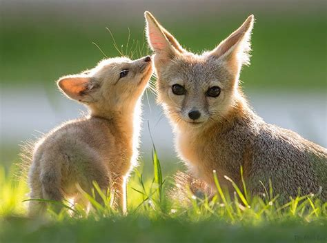 best fox pictures 10 reasons why you should try wildlife photography