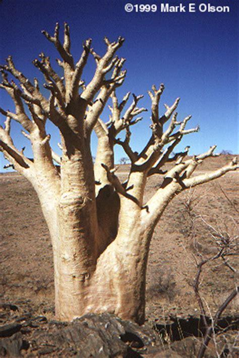 images  dry tropical habitat namibia