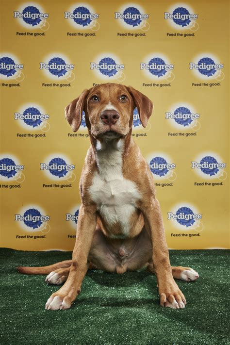 puppy bowl 2017 date and time puppy bowl xiv bark theme encouraged resetera