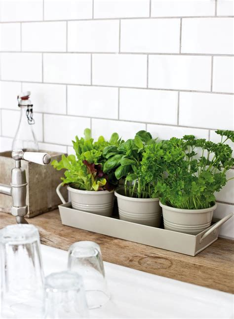 kitchen herbs best 25 kitchen herbs ideas on pinterest