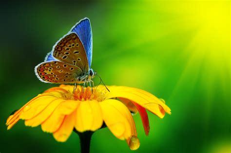 paesaggi di fiori desiderio d infinito tra paesaggi innevati e fiori di