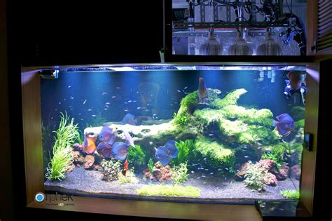 led aquarium lighting blog orphek may 2014