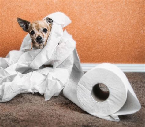 dog poop smell in house 13 ways to pick up dog poop