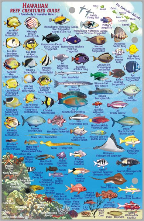 the ultimate guide to hawaiian reef fishes sea turtles hawaii reef big island franko s fabulous maps of