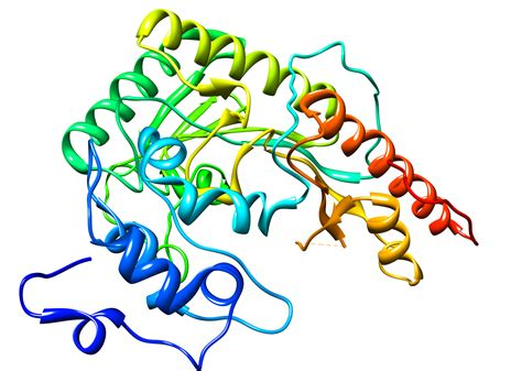 s creatine kinase creatine kinase structure images