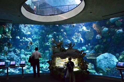 shedd aquarium visit