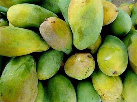 Cerme Manis buah mangga harum manis perlis harumanis agro jurnal