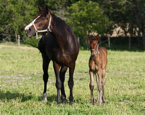 Hourse Matting by Mating With Stallion Just B Cause