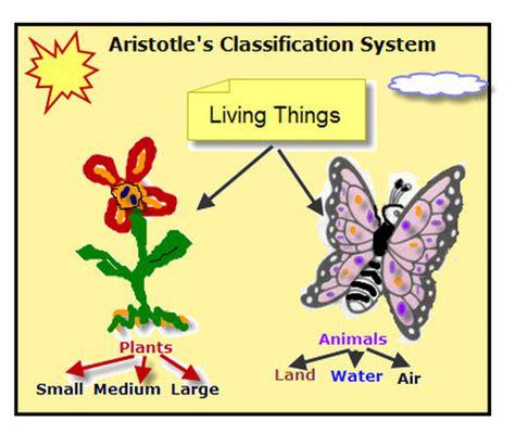 aristotle biography biology classification biology mrs mccomas