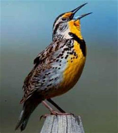 supplement u kansas list of birds of kansas