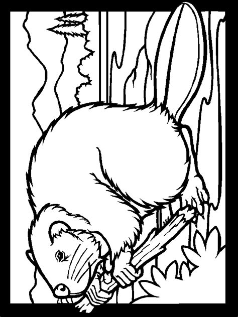 coloring pages of canadian animals coloring page template printing