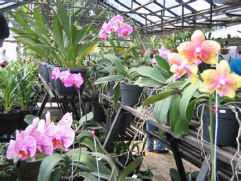 Bibit Anggrek Jogja toko bunga bandung flowers meaning semua tentang bunga