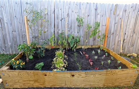Diy Raised Bed Vegetable Garden With Recycle Wood And Wire Small Raised Vegetable Garden