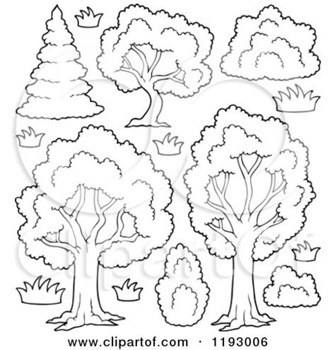 deciduous tree coloring page shrub coloring page outlined lush trees with shrubs and