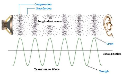 Are Light Waves Transverse by Longitudinal Vs Transverse Waves Longitudinal Sound Waves Move Parallel To Direction Of