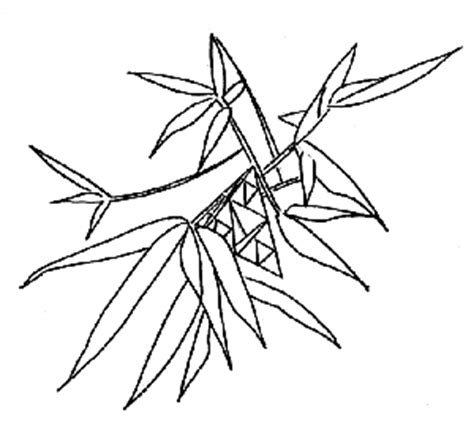 bamboo tree coloring page tetrahedra and icosahedra in trees