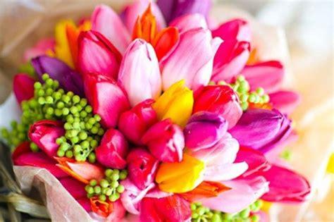 fiori immagini da scaricare immagini floreali giardinaggio immagini fiori