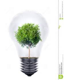 plant growing inside the light bulb stock images image