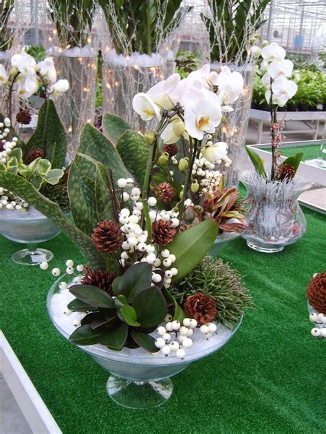 piante grasse in vasi di vetro composizioni di piante grasse in vasi di vetro kq01