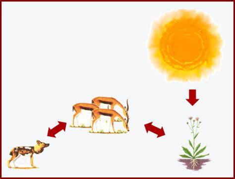 biolog 237 a y geolog 237 a smsavia sistemas inerciales y no inerciales sobre las fuerzas de inercia f 237 sica 1011 tutor