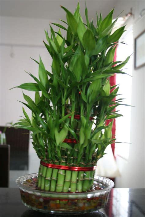 interior plants designs ideas images