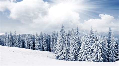 trees snow 7680x4320 desktop wallpapers