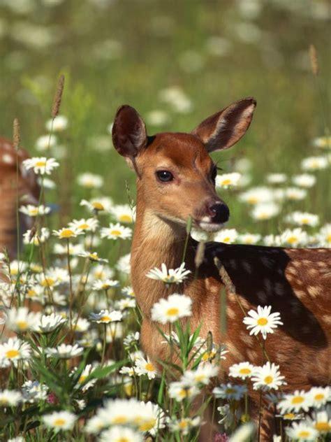deter deer   garden hgtv