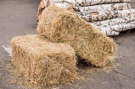 beginners guide  straw bale gardening