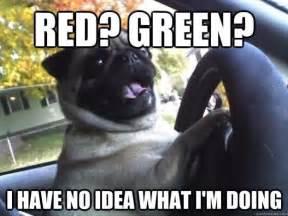 Pug Meme - pug meme precious animals pinterest