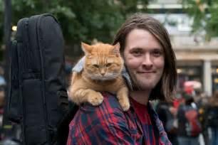 Bobs world cat caf 233 fundraiser indiegogo