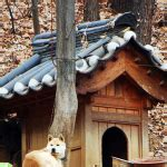 japanese dog house cool dog house