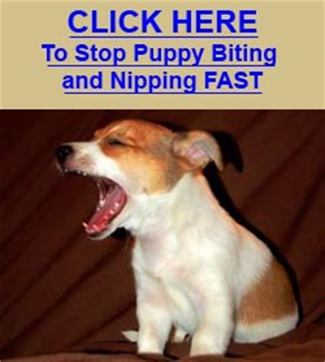 what age do puppies stop biting stop puppy biting learn how to stop puppy biting nipping and mouthing