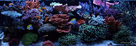 a reefbum s guide to keeping an sps reef tank a blueprint for success books reefbum