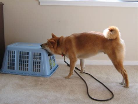 how to keep dog toys from going under the couch fun dog toys my dog s favorite interactive toys