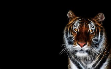 Kaos 3d Tiger Neon cool tiger backgrounds wallpaper cave