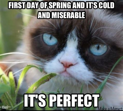 First Day Of Spring Meme - it s spring i love grumpy cat pinterest
