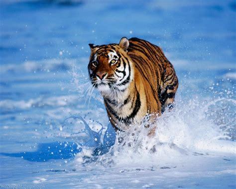imagenes animales bonitas im 225 genes de paisajes bonitos gratis con animales salvajes