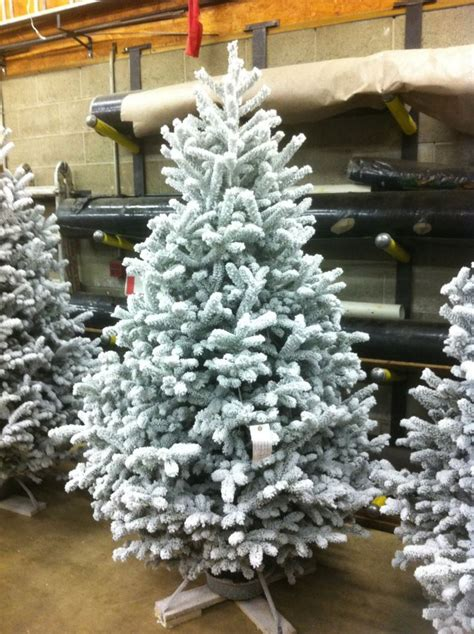 flocked christmas trees on sale stupefy joseph39s nursery
