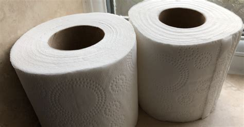 family   toilet roll    years entertainment daily