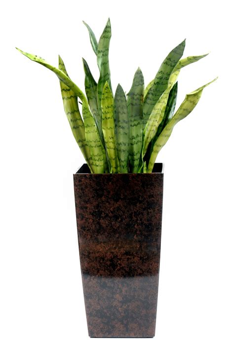 potted tropical plants already these tropical - Potted Tropical Plants