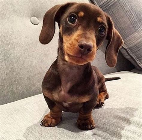 instagram dogs the cutest sausage dogs on instagram popsugar home australia