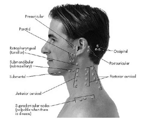 neck lymph node locations diagram respiratory lymph nodes medicine