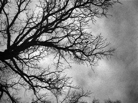black and white tree images troy s photos nature black and white tree in winter