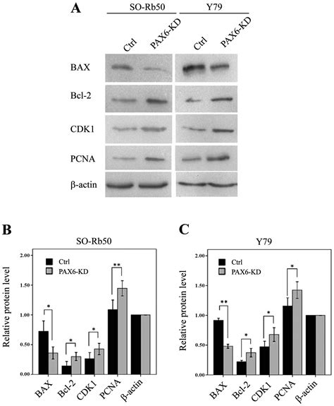How To Detox Apoptotic Nuclear Antigen by Suppression Of Pax6 Promotes Cell Proliferation And