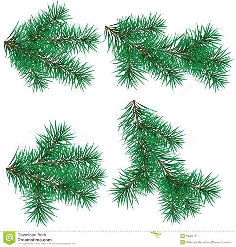 set christmas tree branch for decorate stock vector