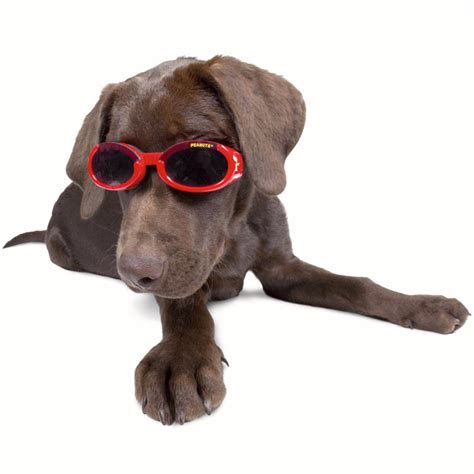 for dogs doggles stylish protective eyewear for dogs the green
