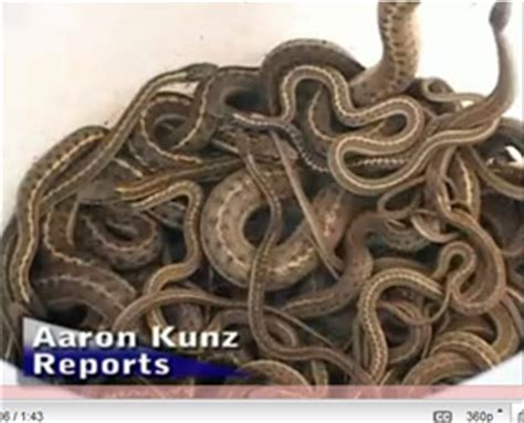house infested with snakes realtor slices price on snake infested home consumerist